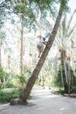 上升在托泽尔绿洲的棕榈树的老人 图库摄影
