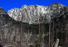 上升在森林后的岩石长城  库存照片