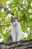 上升在结构树的猫 免版税库存照片