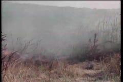 上升在铁丝网篱芭的母牛逃脱火 股票视频
