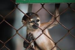 上升在铁栅栏的小猴子 免版税库存图片