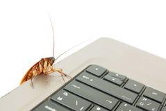 上升在键盘的蟑螂 免版税库存照片