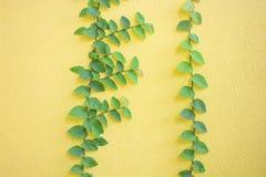 上升在黄色背景的植物叶子,被构造墙壁 免版税库存照片
