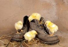 上升复活节的小鸡四双鞋子 库存照片