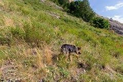 上升对巴什科尔托斯坦共和国- Toratau珍珠  单独山 库存图片
