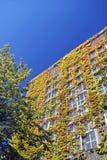 上升的五颜六色的常春藤老大商店 免版税库存图片