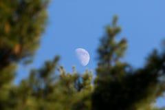 上升的月亮 免版税图库摄影