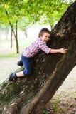 上升的树 免版税库存照片