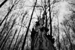 上升的树 库存照片