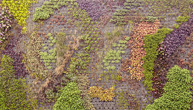 上升的植物显示 免版税库存图片