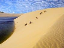 上升的沙丘  免版税库存照片