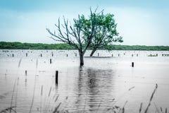 上升的海水平在海岸地区导致fooding 库存照片