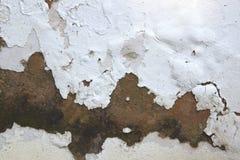 上升的潮湿和剥在外墙上的油漆 免版税库存图片