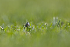 上升的甲虫 免版税库存图片