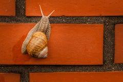 上升的蜗牛 免版税库存照片