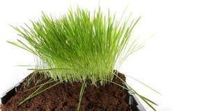 上升的绿草植物4k时间间隔 股票录像