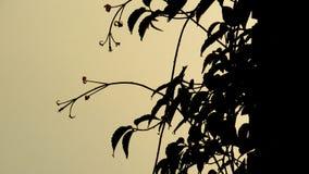 上升,开花的藤植物 库存图片