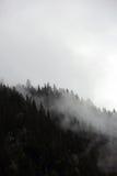 上升从高山山森林的有雾的云彩 库存照片