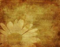 上升cammomile flowe的瓢虫的Grunge图象 免版税库存照片