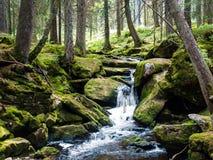 登上在生苔岩石之间的森林瀑布 免版税库存照片