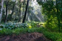 上帝光芒在森林里 免版税库存图片