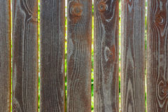 上木 免版税图库摄影