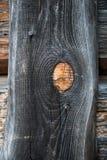 上木 免版税库存照片
