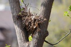 上树灰鼠巢高在一棵树在软的焦点 免版税库存照片