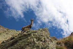 上流在意大利阿尔卑斯 免版税库存照片
