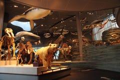 上海自然历史博物馆 免版税库存照片