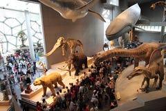 上海自然历史博物馆 免版税图库摄影