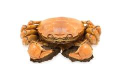 上海长毛的螃蟹 库存照片