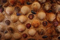 登上的壳背景 图库摄影