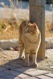 上的猫无家可归的照片街道 免版税库存图片
