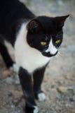 上的猫无家可归的照片街道 图库摄影