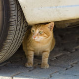 上的猫无家可归的照片街道 库存照片