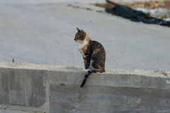 上的猫无家可归的照片街道 库存图片