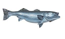 登上的石斑鱼 免版税图库摄影