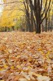 上色叶子 免版税图库摄影