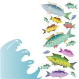 上色在白色背景的美丽的小鱼 图库摄影