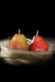 上色在黑背景的两个成熟梨在一个黄色插口 库存图片