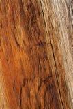 上色橙色温暖的木头 免版税库存照片