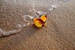 上色海壳射击在海滩的金黄沙子的 库存照片