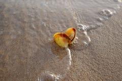 上色海壳射击在海滩的金黄沙子的 免版税库存图片