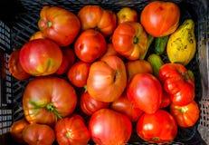 上色祖传遗物红色蕃茄黄色 库存图片