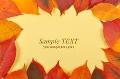 上色祝贺叶子表单黄色 库存图片
