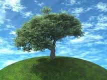 上色绿色水多的结构树 库存照片