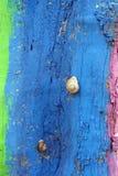 上色蜗牛 免版税库存照片
