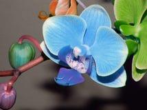 上色许多兰花兰花植物 库存图片
