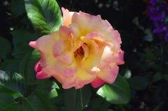 上色配色计算机花被生成的和谐顶头图象 库存照片